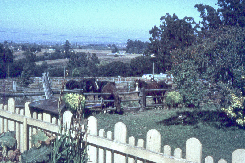 The view from the house at Kennedy Road.  Yes, they had horses and there is a story to that.