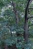 Sherbet in Tree 09-25-11- 012ps