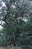 Sherbet in Tree 09-25-11- 007ps