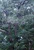 Sherbet in Tree 09-25-11- 004ps