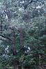 Sherbet in Tree 09-25-11- 003ps