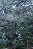 Sherbet in Tree 09-25-11- 002ps