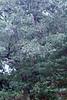 Sherbet in Tree 09-25-11- 001ps