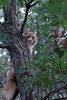 Sherbet in Tree 09-25-11- 010ps