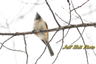 Amherst Birds