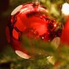 christmas-2009-0071