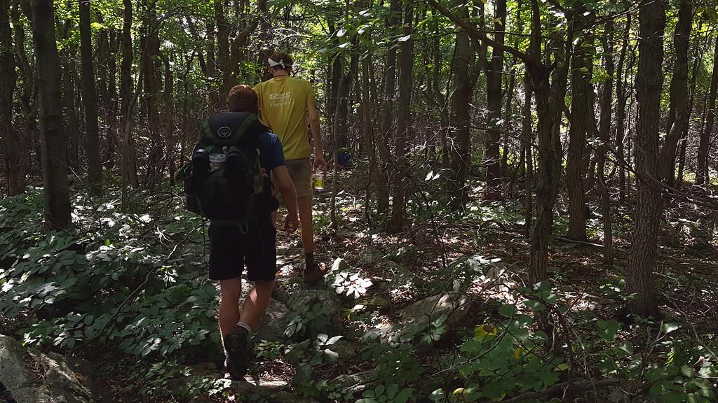 Into the woods (near Lehigh Furnace Gap)