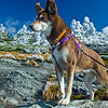 Dog: Rosie, W here: Top of Mt. Mansfield on October 13th. Photographer: Benjamin D. Bloom, Owner: Tawny Champagne
