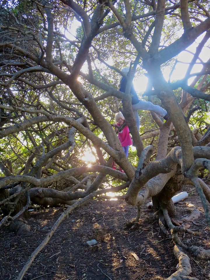 Allegra and Addie climbing