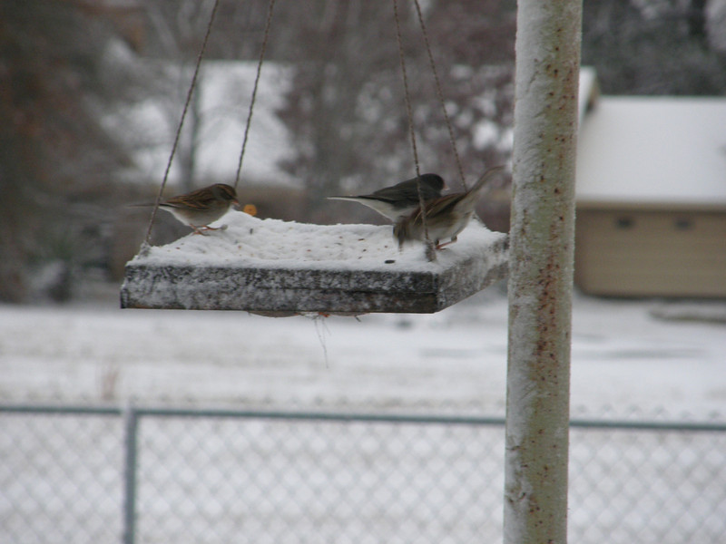 Thank goodness for this birdseed!