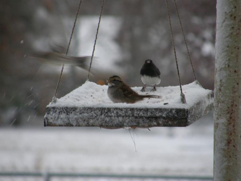 Happy birds.  I think.