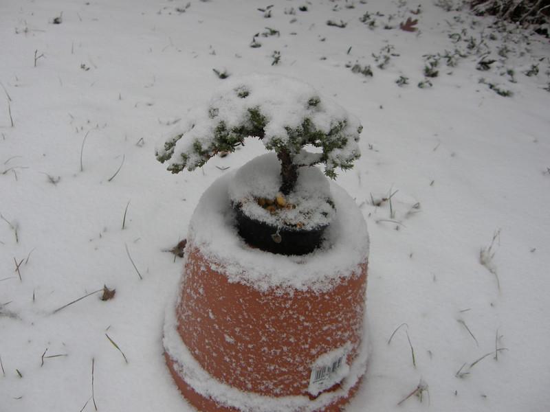 Hope my bonsai is ok.
