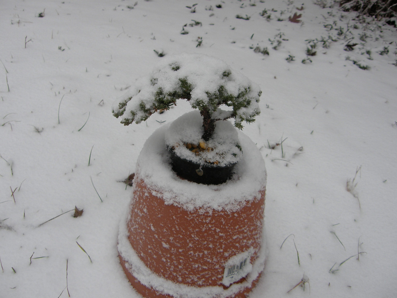 Hope my bonsai is ok.