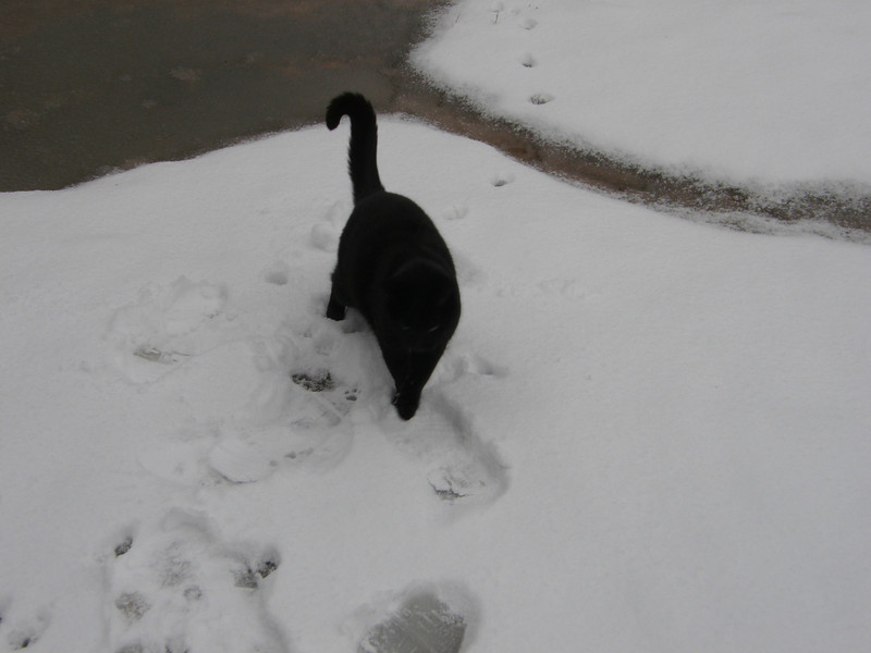 Salem did not like the snow at all.