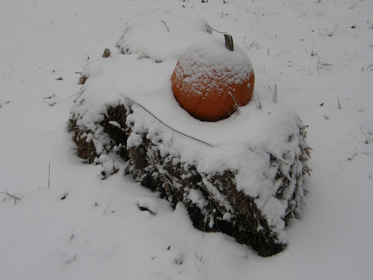 Now this is for sure frost on the pumpkin!  Er, I mean snow on the pumpkin!