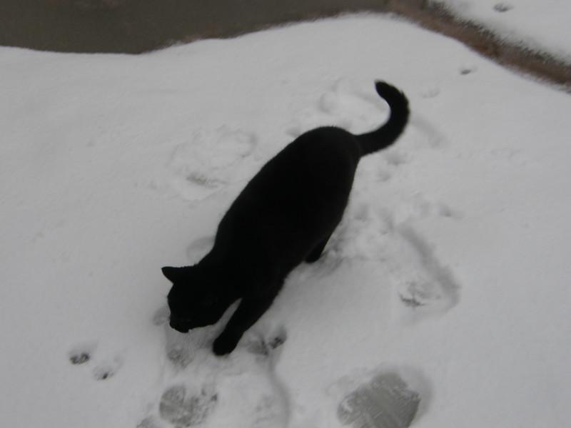 Salem picking a path.