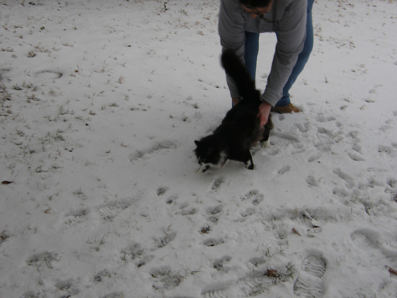 Boo does not like the snow either.  Lee Ann trying to introduce Boo to snow.  Boo wants none of it.
