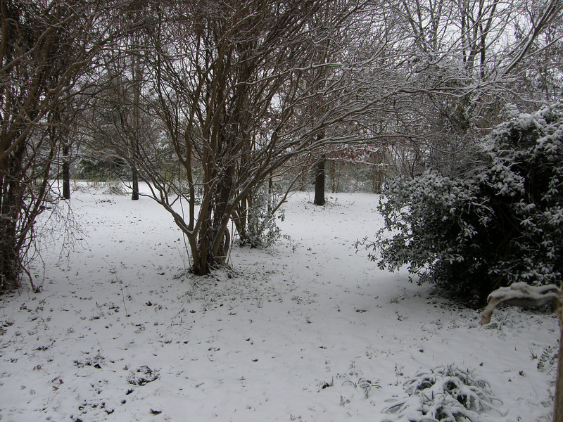 Snow in my front yard!