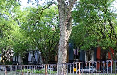 Madison Place - Albany, NY