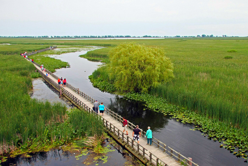 Boardwalk at Point Pelee National Park