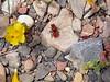 Wild life too. A velvet ant.