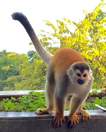 Steph's Costa Rica Photos - 2014