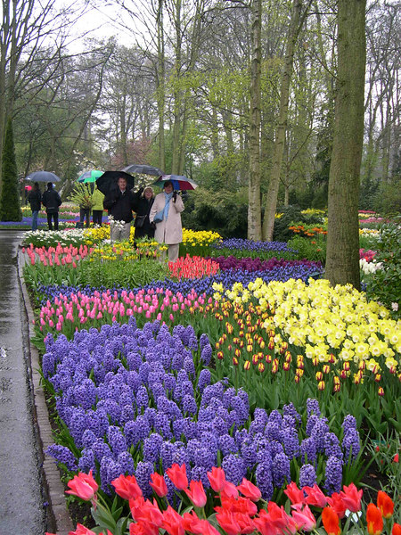 Looking over the tulip beds.