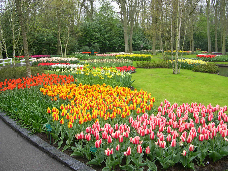 Tulips of every size and color.