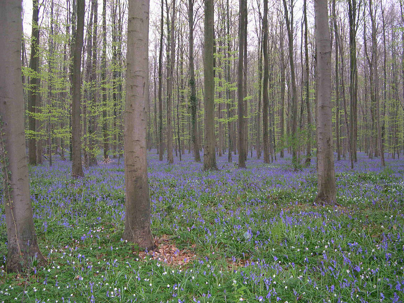 "It looked like a ""blue mist"" covered the ground everywhere in the forest."