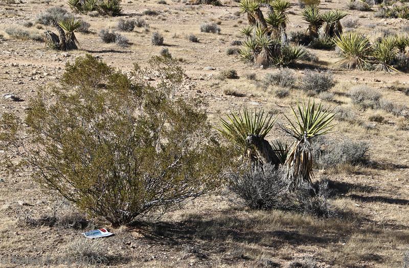 Desert scrub