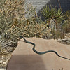 Snake statue (no, it isn't real), Red Rock visitor center