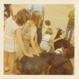 Pet the Goat 1970