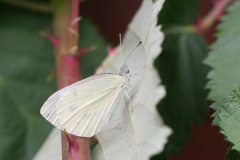 Closeup test from the Cogan's garden
