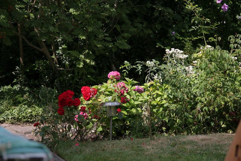 In the Cogan Passow Garden in Surheide