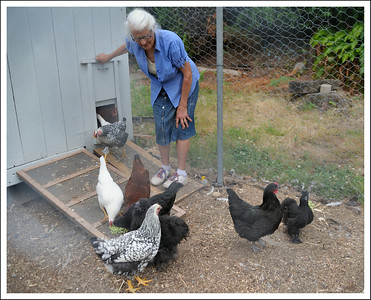 Aunt Maria and her chickens