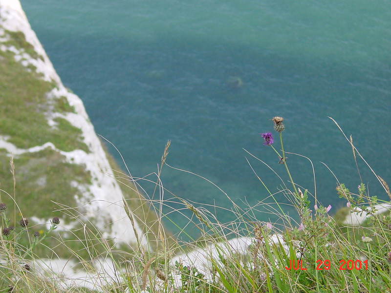 SE England Coast - Dover.  Notice the thisle!