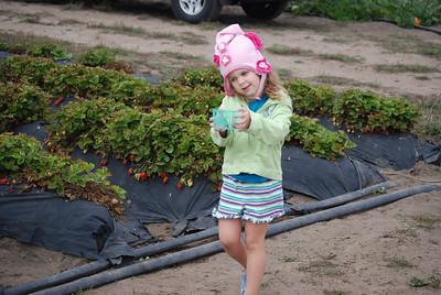 Strawberry picking @ Swanton Farm: 9/24/09