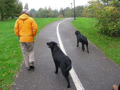 Mike with the two flat-coated retrievers, Pasha and Maud, taking a walk through The Lawns.