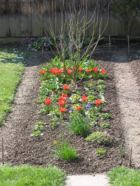 Mueti's (Verena's mother) garden in Langenthal