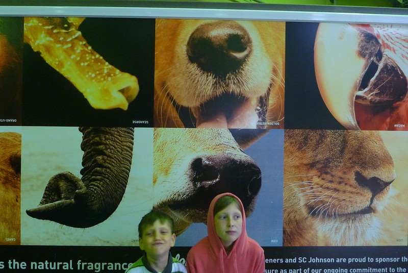 Sydney - Taronga Zoo - A collection of noses