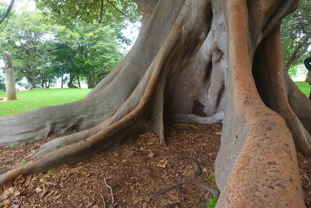 Sydney - Botanical Gardens