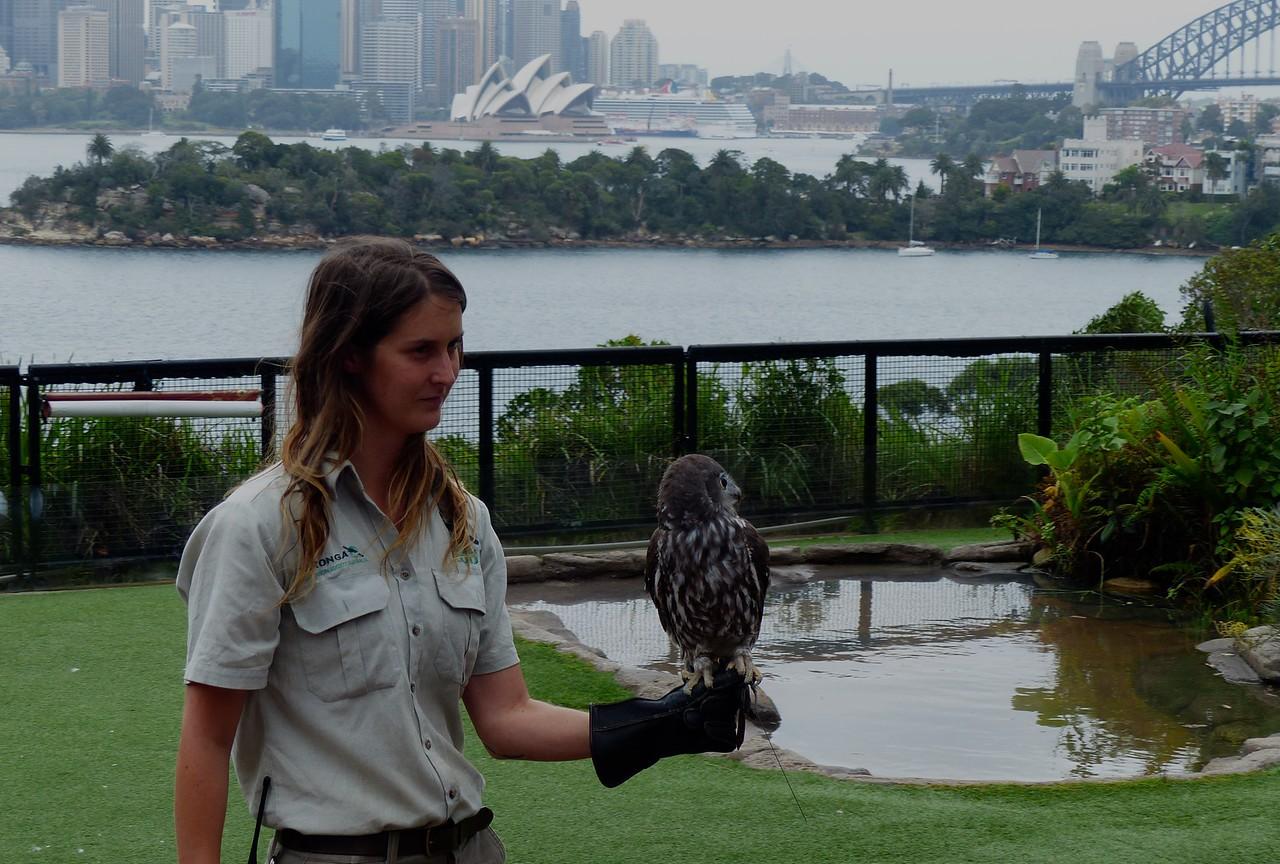 Sydney - Taronga Zoo - Bird show
