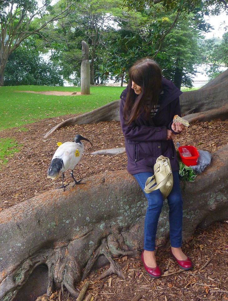 Sydney - Botanical Gardens - Heidi has a visitor