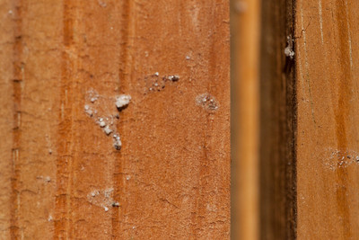 """Shed Siding."" A photograph by Sydney as she experiments with macro photography using Mom's camera and a Sigma 150mm f2.8 APO Macro DG EX HSM lens (Image taken by Sydney J. Kane on 19 Sep 2010 with Canon EOS 20D at ISO 400, f6.3, 1/800 sec and 150mm)"