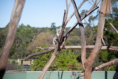 Symbio Wildlife Park