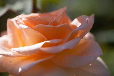 Hillwood Gardens (29 Sep 2012)
