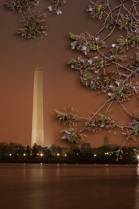This year's National Cherry Blossom Festival honors the 100-year anniversary of the gift of trees (Image taken by Sydney J. Kane on 24 Mar 2012 with Canon EOS 5D at ISO 200, f32.0, 1/30 sec and 88mm)