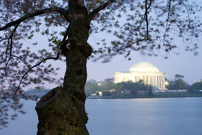 This year's National Cherry Blossom Festival honors the 100-year anniversary of the gift of trees (Image taken by Sydney J. Kane on 24 Mar 2012 with Canon EOS 5D at ISO 200, f32.0, 1/30 sec and 70mm)