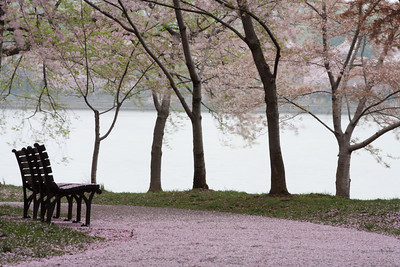 This year's National Cherry Blossom Festival honors the 100-year anniversary of the gift of trees (Image taken by Sydney J. Kane on 24 Mar 2012 with Canon EOS 5D at ISO 200, f32.0, 1/4 sec and 182mm)