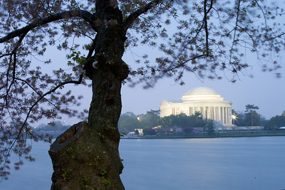 This year's National Cherry Blossom Festival honors the 100-year anniversary of the gift of trees (Image taken by Sydney J. Kane on 24 Mar 2012 with Canon EOS 5D at ISO 200, f32.0, 1/20 sec and 70mm)